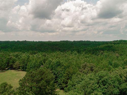 Vacant Timberland, Hunting : Lynn : Winston County : Alabama