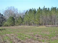 Timberland For Sale In Pansey, Al : Pansey : Houston County : Alabama