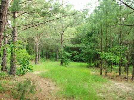 57 Acres On Highway 183 : Lawley : Chilton County : Alabama