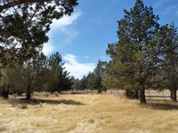 California Acreage Well & Wildlife : Alturas : Modoc County : California