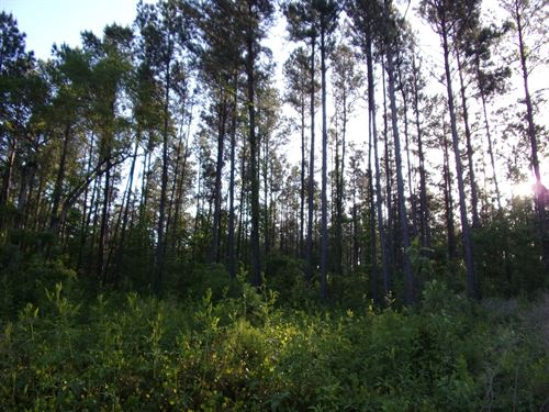 270 Acres Land Brooklet, GA : Brooklet : Bulloch County : Georgia