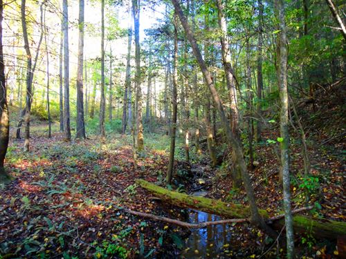 North Georgia Mountain Acreage : Ellijay : Gilmer County : Georgia