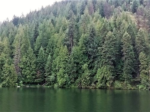 North Idaho Lake Waterfront Land : Rathdrum : Kootenai County : Idaho