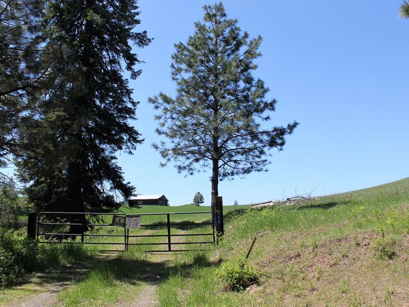 Recreational Acreage 555 Deer Cedar : Orofino : Clearwater County : Idaho