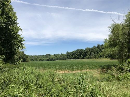 Wooded, Acreage, Creek, Metcalfe : Summer Shade : Metcalfe County : Kentucky