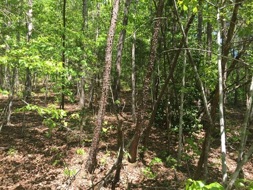 24 Secluded Acres / Hunt Build : Liberty : Casey County : Kentucky