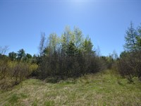 Maine Land For Sale in Bancroft : Bancroft : Aroostook County : Maine