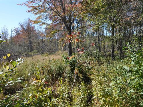 Maine Land For Sale in Carroll Plt : Carroll : Penobscot County : Maine