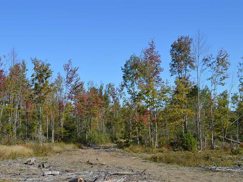 Maine Land in Carroll Plantation : Carroll : Penobscot County : Maine