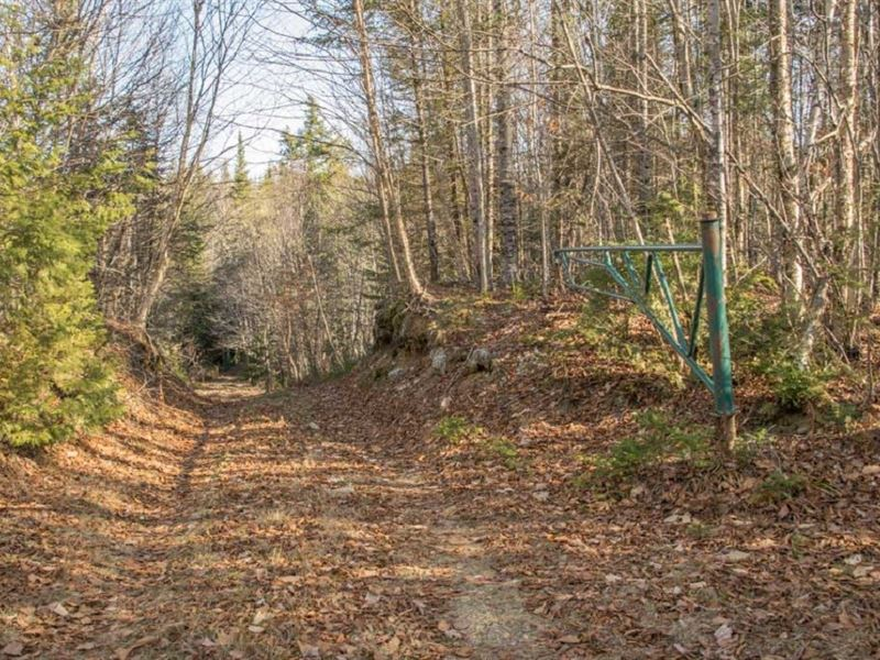 Maine Cabin For Sale in Springfield : Springfield : Penobscot County : Maine
