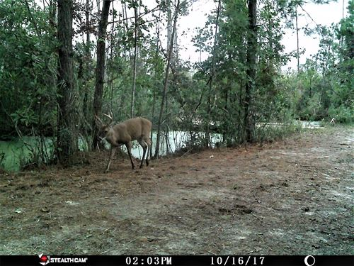 262 Acres Tyrell Co, Bear, Deer : Columbia : Tyrrell County : North Carolina