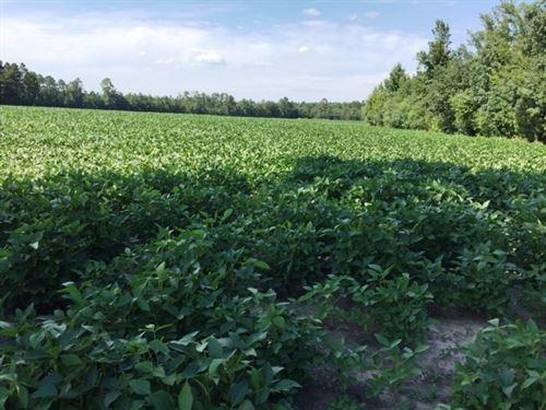 Farm, Devel Land, Sharon Church Rd : Fayetteville : Cumberland County : North Carolina