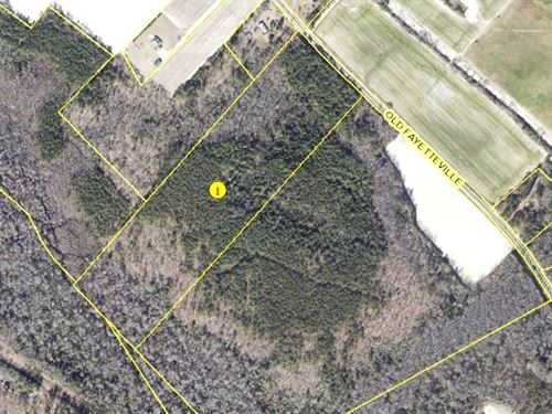 Undeveloped Woodland, Garland, NC : Garland : Duplin County : North Carolina