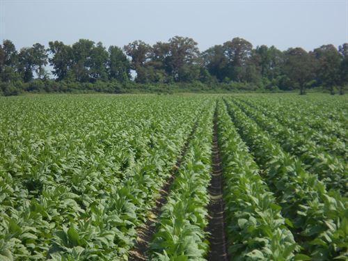 North Carolina Tobacco Farms For Sale Tobacco Farmland For Sale Farmflip