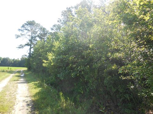 Hunting/Timber Tract Martin Co : Jamesville : Martin County : North Carolina