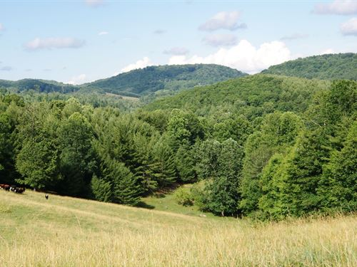 Gorgeous 30+ Acre Tract Long Range : Laurel Springs : Alleghany County : North Carolina