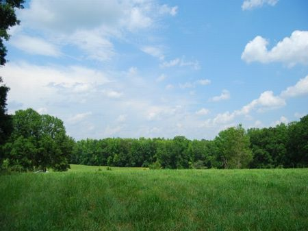 229 Acres On S. Tyger River : Spartanburg : Spartanburg County : South Carolina