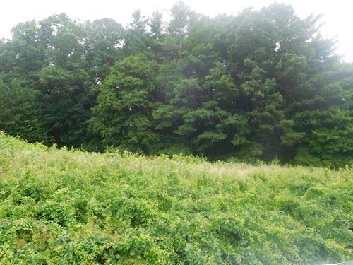 Land Ennice NC Acreage Alleghany CO : Sparta : Alleghany County : North Carolina