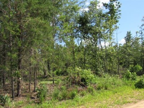 9 Acres Hunting Land Southeastern : Spencerville : Choctaw County : Oklahoma