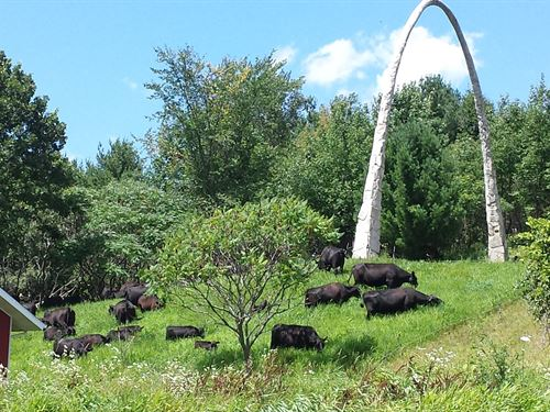 333 Acre Former Organic Grass Fed : Hillsboro : Vernon County : Wisconsin
