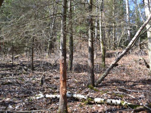 Prime Hunting Property : Mindoro : La Crosse County : Wisconsin