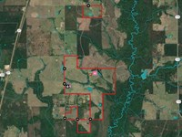 Smokey Cove Road Cattle Ranch, Bea : Singer : Beauregard Parish : Louisiana