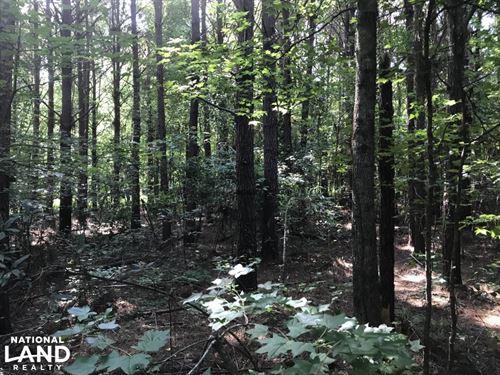 Timber, Bucks, Turkeys And Ducks : Pheba : Clay County : Mississippi