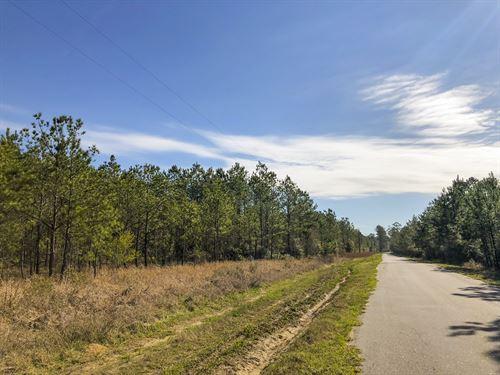 61 Acres Cr 62 : Jasper : Texas