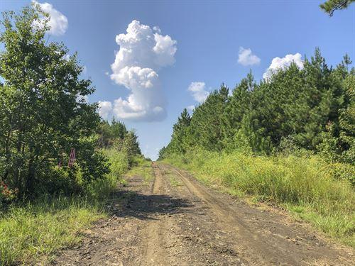 667 Acres Easement Road : Woodville : Tyler County : Texas