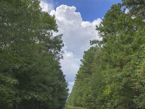 444 Acres County Line Road : Willis : Montgomery County : Texas