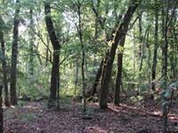 Mature Timberland With Recreationa : Crystal : Atoka County : Oklahoma