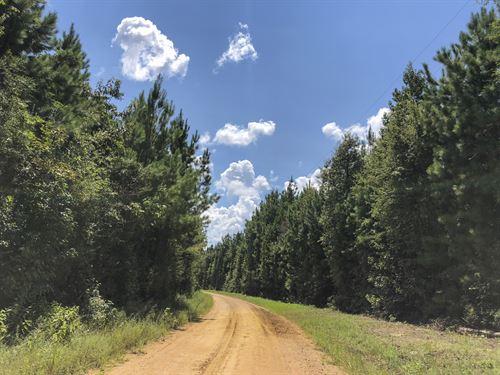 150 Ac Felps Faircloth : Warren : Tyler County : Texas