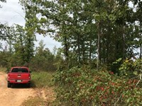 8 Acres Great For Hunting In Mo : Ava : Douglas County : Missouri