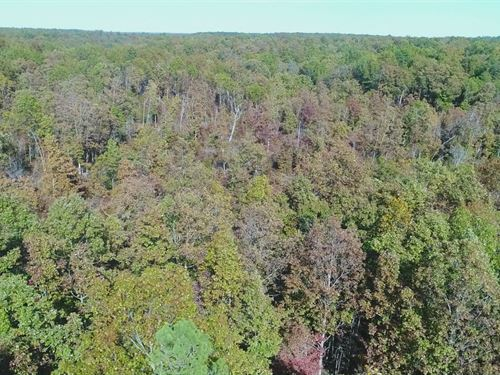 5 Acres On Conservation Land In Mo : Ava : Douglas County : Missouri