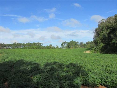 17.26 Acres of Farmland in East CO : Moultrie : Colquitt County : Georgia