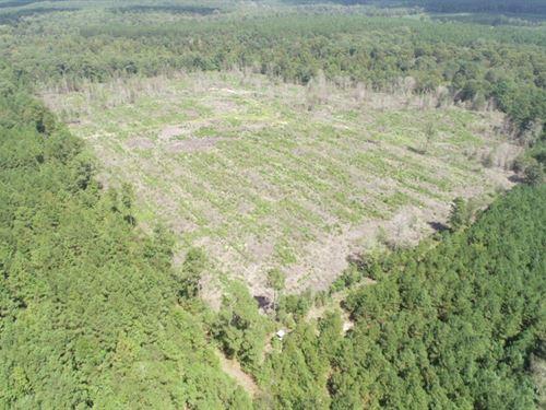 Pine Timberland Investment Property : Rosston : Nevada County : Arkansas