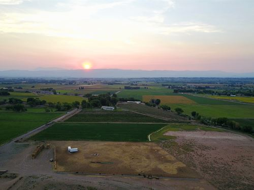 Western Colorado Winery, Vineyard : Olathe : Montrose County : Colorado