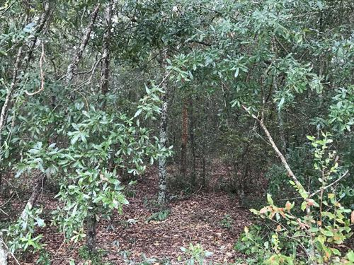 This 5 Acre Tract is Priced to Sell : Live Oak : Suwannee County : Florida