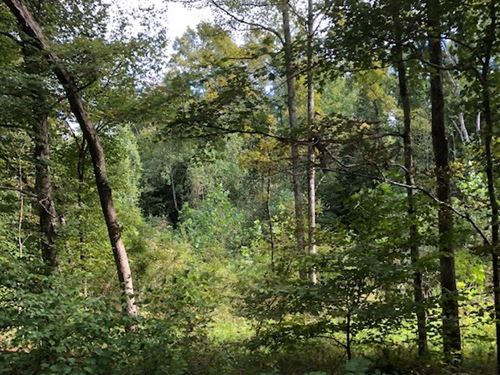 31.2 Wooded Acres Country Great : Lobelville : Perry County : Tennessee
