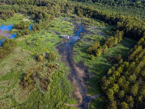 100 AC Prime Duck Hunting Land : Milan : Gibson County : Tennessee