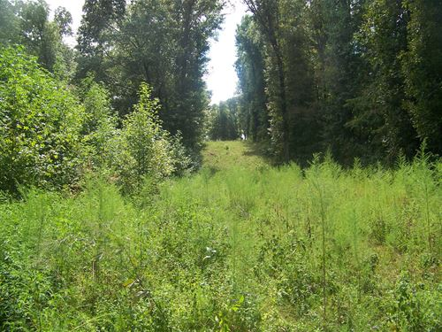 Hunting Land Tn, No Restrictions : Morris Chapel : Hardin County : Tennessee