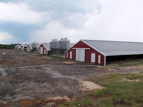 East Texas Poultry Farm, Wood : Winnsboro : Wood County : Texas