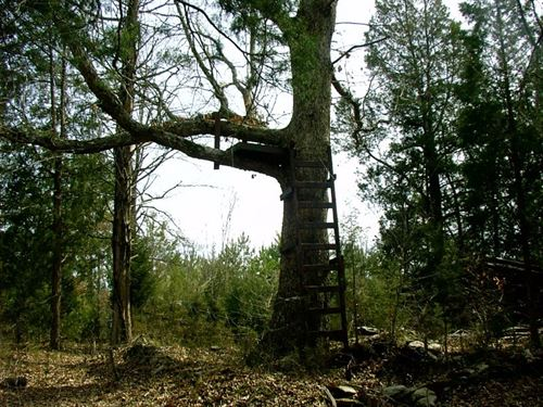 Off Grid Hunting Camp/Survival : Kenbridge : Lunenburg County : Virginia