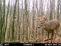 Affordable Hunting Land For Sale : Viola : Richland County : Wisconsin