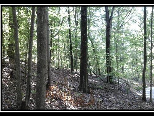 The Woods At Cohagen Tract 5 : Logan : Hocking County : Ohio
