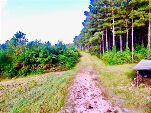 Premier Hunting Property Beaufort : Washington : Beaufort County : North Carolina