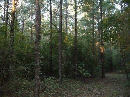 Rankin 251 : Puckett : Rankin County : Mississippi