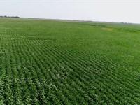 496 Acres in Sanborn County SD : Letcher : Sanborn County : South Dakota