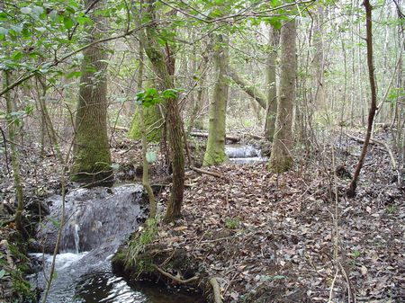 Laurelwood Property : Columbia : Richland County : South Carolina