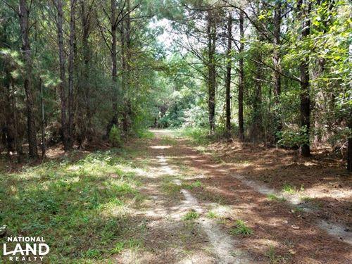 Northwest Coffee Timber Tract : Elba : Coffee County : Alabama